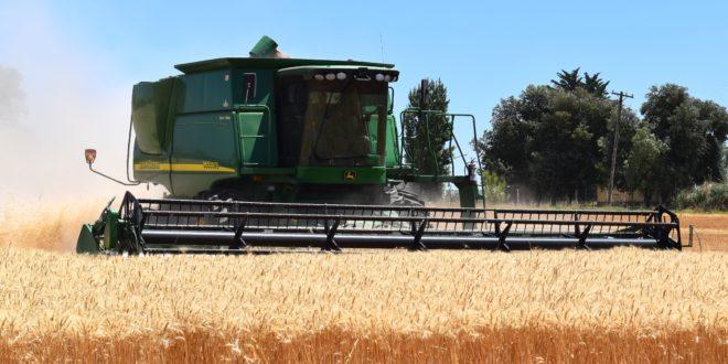 harvest-1907821